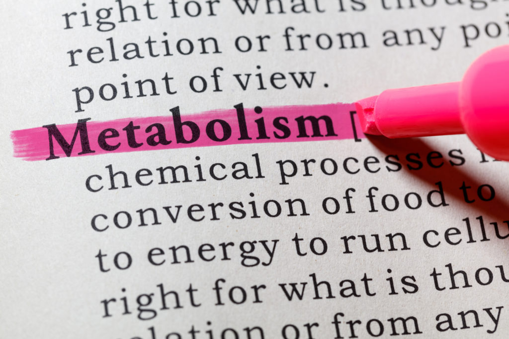 close up of the word metabolism in the dictionary and highlighted by pink marker
